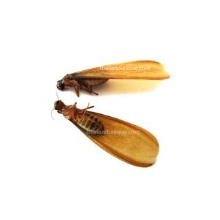 Edible Winged Flying Termites