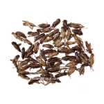 500g Dehydrated Acheta Domestica Crickets