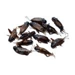 500g Dehydrated Gryllus Bimaculatus Crickets